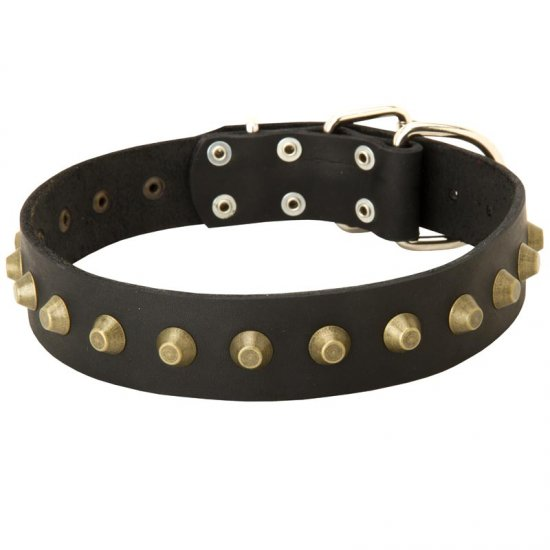 Leather American Bulldog Collar with Brass Pyramids