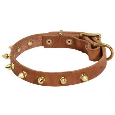 Walking Designer Leather American Bulldog Collar with Brass Spikes