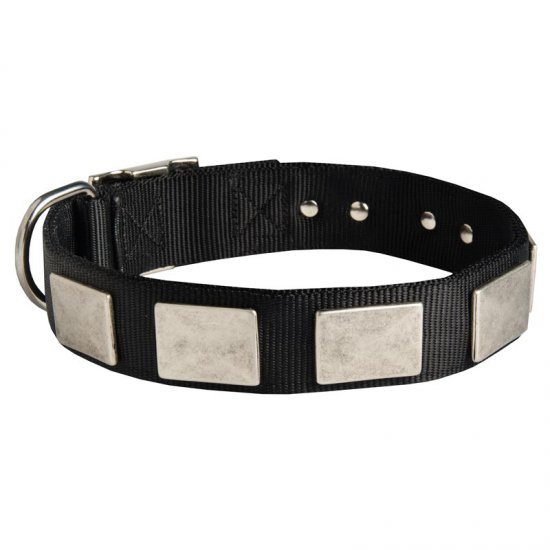 Nylon American Bulldog Collar Massive Nickel Plates