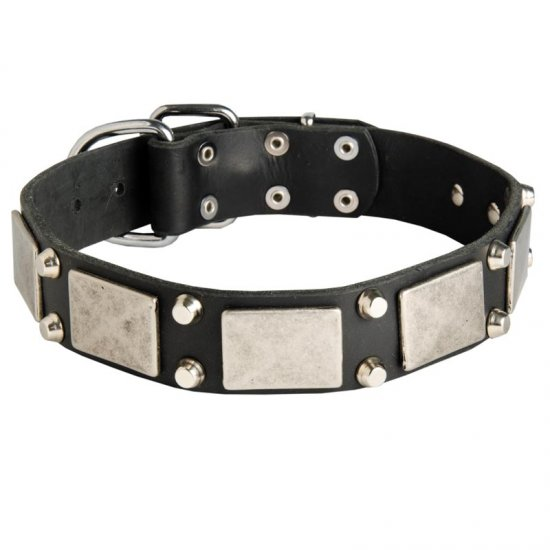 Leather American Bulldog Collar Decorated with Nickel Cones and Plates