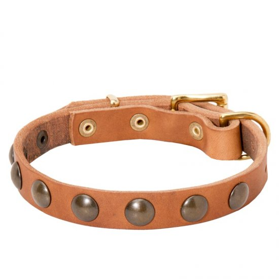 Leather American Bulldog Collar with Brass Half-Ball Studs