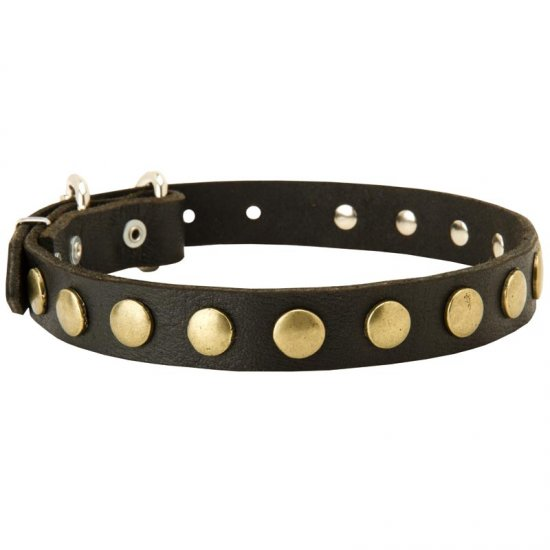 Leather American Bulldog Collar with Brass Circles for Fashionable Walking