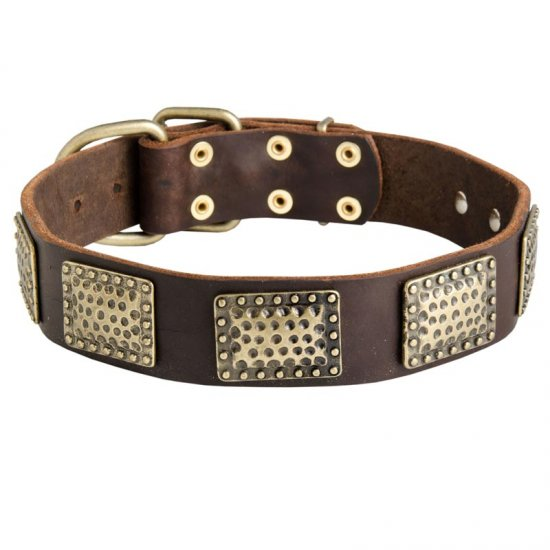 Leather American Bulldog Collar with Massive Brass Plates