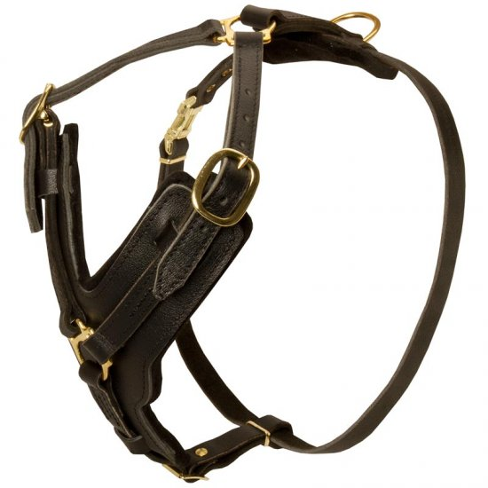 Padded Leather American Bulldog Harness for Agitation Training