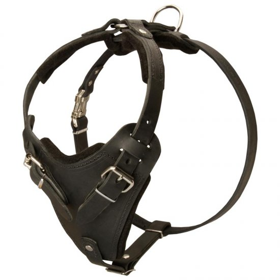 Protection Leather American Bulldog Harness for Attack / Agitation Dog Training