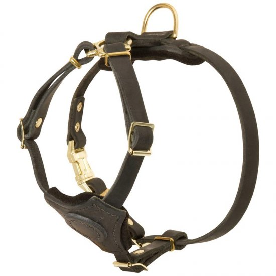 Spruce Leather American Bulldog Harness With Small Chest Plate