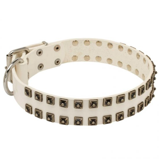 White Leather American Bulldog Collar with Old Nickel Square Studs for Daily Dog Walking - NEW OFFER