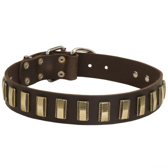 Leather American Bulldog Collar with Awesome Brass Plates