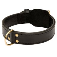 Training 2 Ply Leather American Bulldog Collar