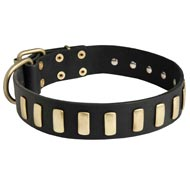 Fancy Leather American Bulldog Collar with Brass Plates
