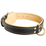 Padded Leather American Bulldog Collar