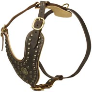 Royal Design Leather American Bulldog Harness with Brass Studs