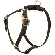 Y-Shaped Leather American Bulldog Harness for Tracking and Training