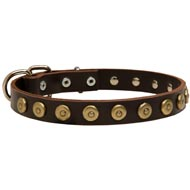 Leather American Bulldog Collar with Brass Dotted Circles for Fashion Walking