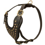 Adjustable Studded Leather American Bulldog Harness for Fashion Walking