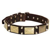 Leather American Bulldog Collar with Studs and Plates