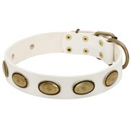 White Leather American Bulldog Collar with Brass Oval Plates
