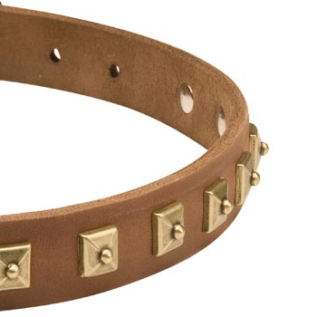 Leather Dog Collar for American Bulldog with Studs