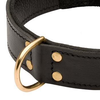 Brass D-ring Stitched to Leather American Bulldog Collar