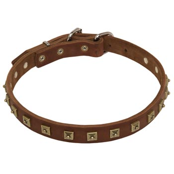 American Bulldog Leather Collar For Walking And  Training in Style