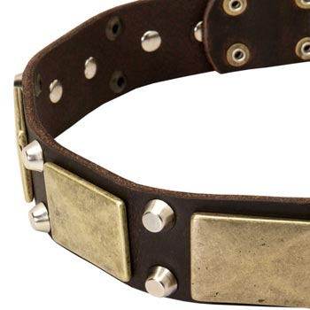 Leather American Bulldog Collar with Nickel Studs