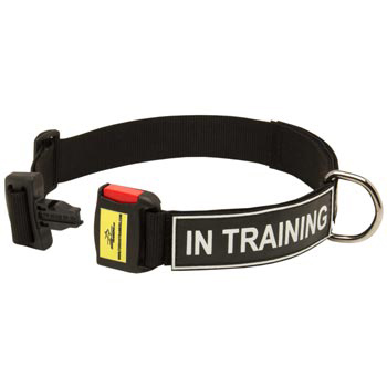 Nylon Dog Collar for American Bulldog Police Training