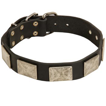Walking Leather American Bulldog Collar