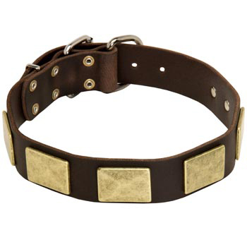 Leather American Bulldog Collar with Fashionable Studs