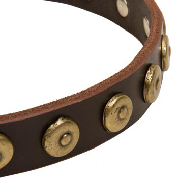 American Bulldog Collar with Stylish Circles