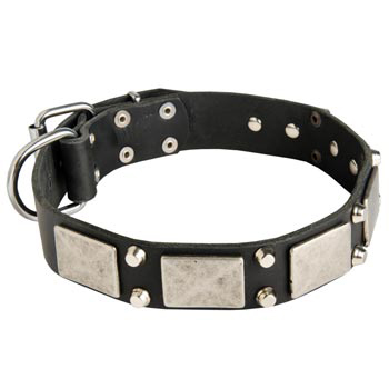 Studded Leather American Bulldog Collar