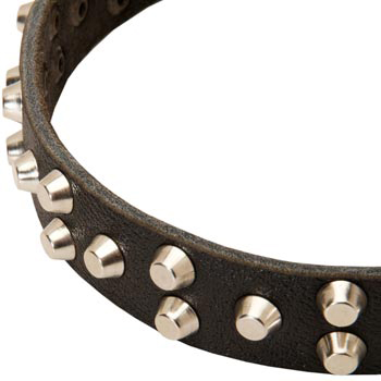 Leather American Bulldog Collar Durable Stud Decorated