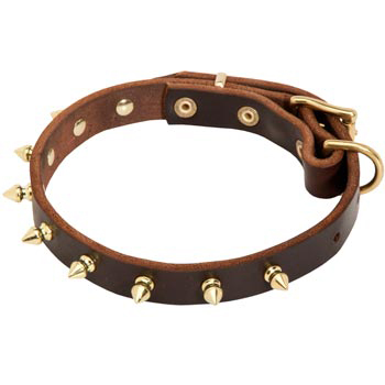 Leather American Bulldog Collar with Brass Spikes