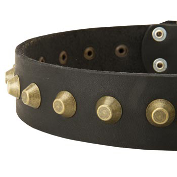 Leather Dog Collar with Brass Pyramids for American Bulldog