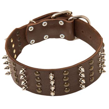 Leather Collar for American Bulldog Walking in Style