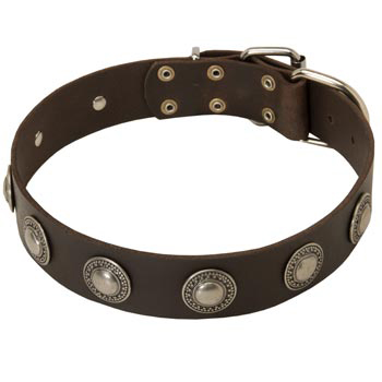 Training Leather   American Bulldog Collar for Stylish Dogs