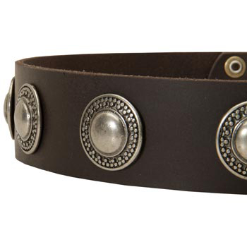 Leather Dog Collar with Conchos for   American Bulldog