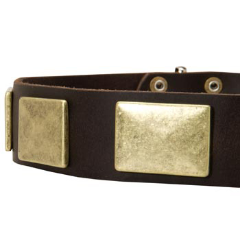 Leather Dog Collar with Massive Brass Plates for American Bulldog