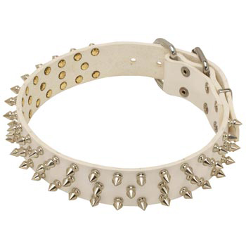 Spiked White Leather Collar for American Bulldog Walking