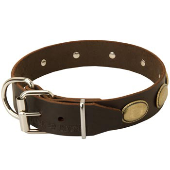 Fashionable Leather Collar for American Bulldog