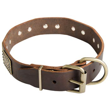 War-Style Leather Collar for American Bulldog