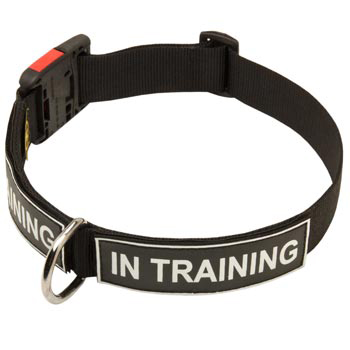 Nylon American Bulldog Collar With ID Patches