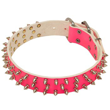 Pink Leather Collar for American Bulldog She-Dogs