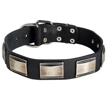 Leather American Bulldog Collar with Solid Nickel Plates