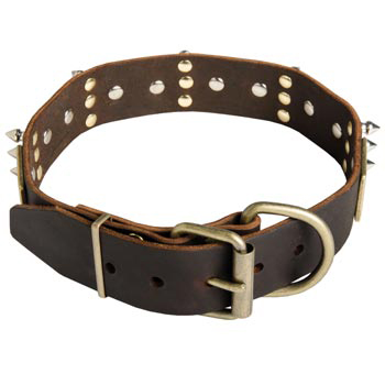 Spiked Leather American Bulldog Collar