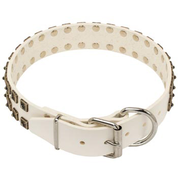 White Leather Dog Buckle Collar for American Bulldog