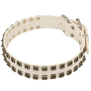 Studded White Leather Dog Collar for American Bulldog
