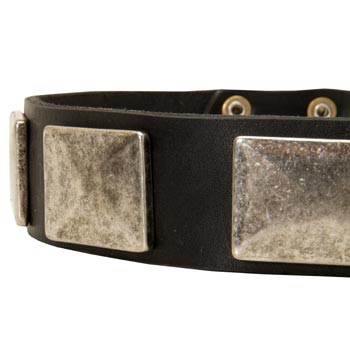Wide Leather American Bulldog Collar for Walking