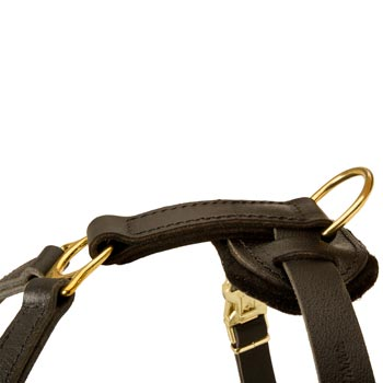 Corrosion Resistant D-ring of American Bulldog Harness