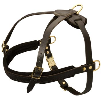 Leather American Bulldog Harness for Dog Off Leash Training