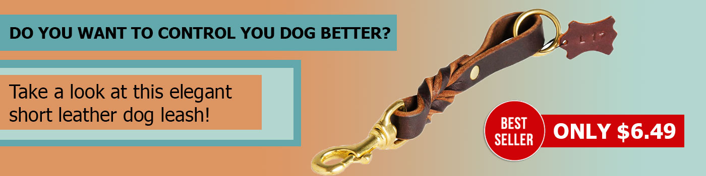 Short Leather American Bulldog Leash (Pull Tab Leash)